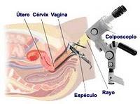 ovulos ginkan durante menstruacion
